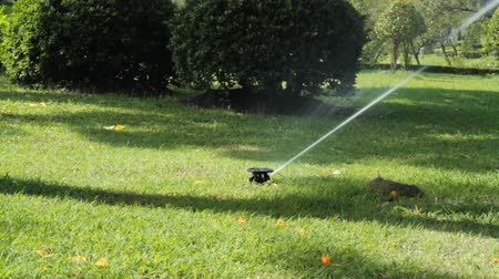 front or back yard : Sprinkler in the garden