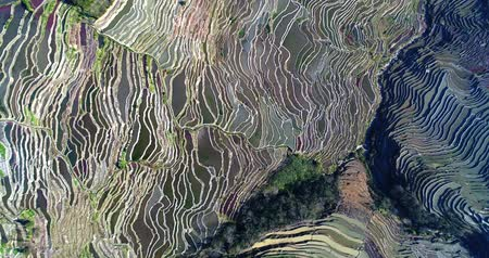 obsah : World�s most amazing places. Rotating aerial view on worlds most spectacular rice fields, the Yuanyang Hani Rice Terraces in southeastern Yunnan province, China. A UNESCO World Cultural Heritage Site.