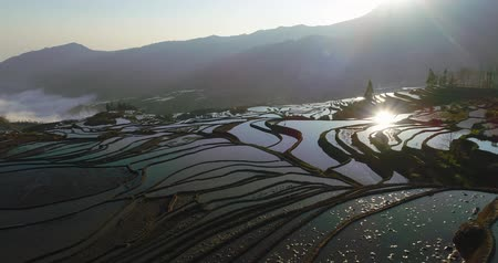 gerçeküstü : Aerial morning scene of water-filled Rice Terraces and reflections on the water surface. Yuanyang, Southern Yunnan Province, China.