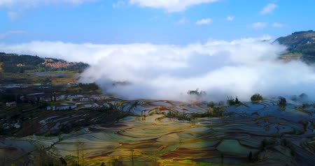 Flying over colorful rice terrace fields towards a sea of clouds. Part 1 of a 3 part series which can be merged into a continuous movie.