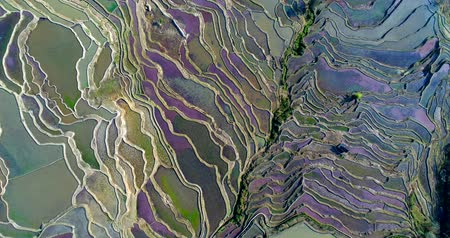Ascending drone flight showing water-filled Hani Rice terrace fields during spring, when red duckweed and other water plants turn the rice paddies colorful. Yuangyang, Yunnan, China. Stock mozgókép