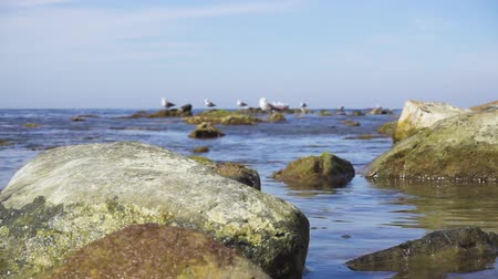 Slow motion large stones in clear calm water on the horizon gulls on rocks and ships in the roadstead are out of focus