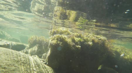 Light movement of the camera under water on a stony shore. stones and water are turbid and in seaweed slow motion Stok Video