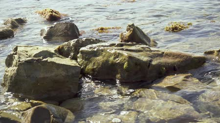 Small waves roll on rocks in seaweed on the coastal strip Stok Video