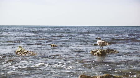 The seagull stands on a rock turning its head to the left in the disturbing water slow mo