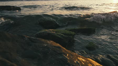 Slow motion a few stones in the water on the shore in seaweed rolls the wave in the setting sun