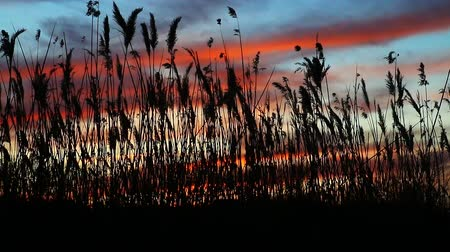 marsh : The sunlight over sky background of sunset