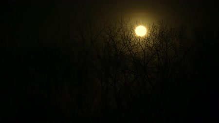 perili : Full Moon with night clouds and large wicked tree time