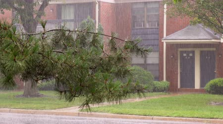 Heavy thunderstorm with rain wind bending trees in residential area