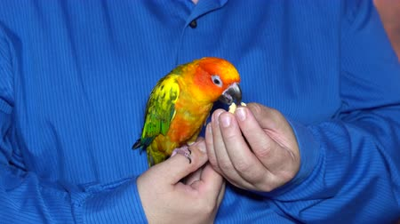 Man playing with his parrot holding colorful