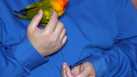 Man enjoy playing with parrot in house enjoy holding colorful parrots