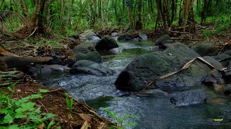 kapradina : stream Flowing through a rock covered with moss in rainforest of Koh yao yai,Phang Nga,Thailand