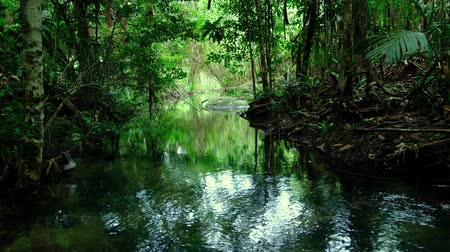 kapradina : green trees around the streams represent the abundance of rainforest in Thailand,Phang Nga,Koh Yao Yai