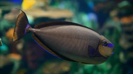 plavat : Tropical fish in aquarium