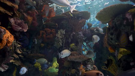 Beautiful coral reefs and fish in the aquarium
