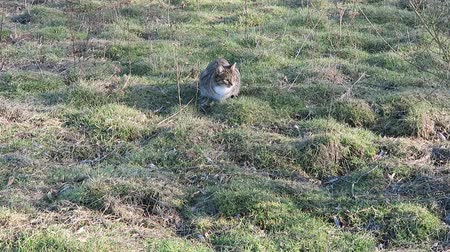Little wild domestic cat playing in green grass