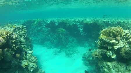 jasno : Video shot with the camera. Shallow coral reef and clear water. Summer. Red sea. Dostupné videozáznamy