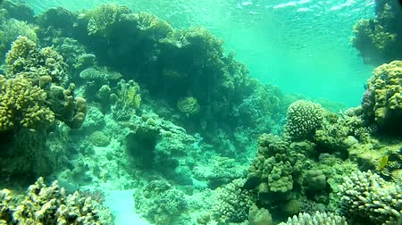 podwodny swiat : Adventure in the sea. Video shot using a camera. Shallow coral reefs and clear water. Summer. Red sea. Wideo