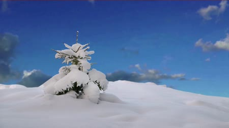 Small spruce tree covered in snow on blue sky