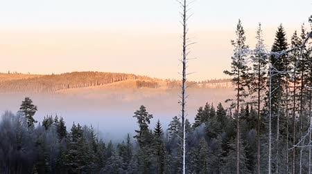 Scandinavian forest in fog on sunny winter day Stok Video
