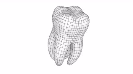 molar : Tooth. Looping footage with Encoder Prores 4444 has 4K Resolution. Alpha channel.