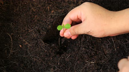 natural world : planting tree, sprout
