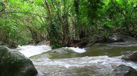 floresta tropical : Waterfall in tropical forest