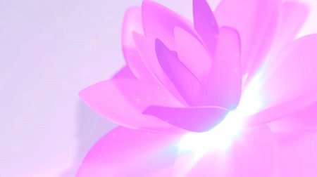 loto : Pink Flower Background
