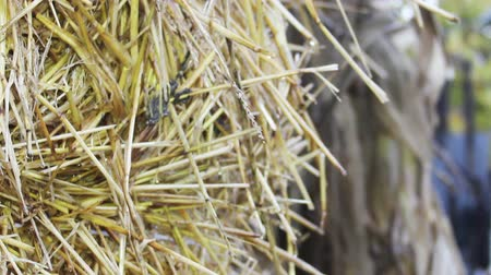 balé : close-up bale of straw at the wind Stock Footage