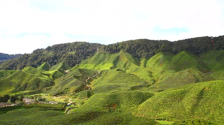 boerenland : Theeplantages in Cameron Highlands, Maleisië.