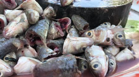bot : Rotten fish stinky smell with flies in Asian market - Unhealthy dirty food bacteria contaminated, food poisonous risk