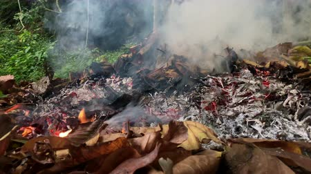 futótűz : Hot Fire flame burning dried leaves in the forest in the autumn with a lot of smoke, wildfire pollution problem
