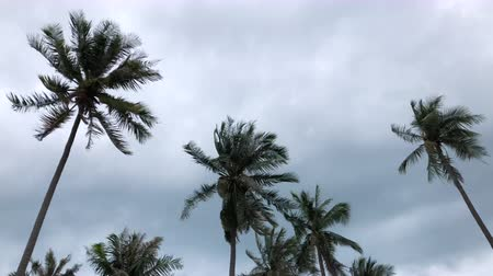 instável : Coconut tree shake in windy monsoon season with dark cloud sky in tropical island.