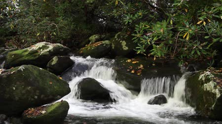 çatallar : Waters Of Roaring Fork Motor Trail In The Smoky Mountains Stok Video