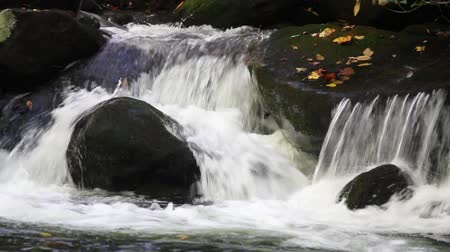 gabel : Waters Of Roaring Fork Motor Trail in den Smoky Mountains