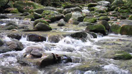 füstös : Waters Of Roaring Fork Motor Trail In The Smoky Mountains Stock mozgókép