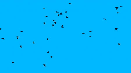 uçan : Abstract Cartoon Flock Of Birds Flying (Crows) on the blue magical background (Full HD)
