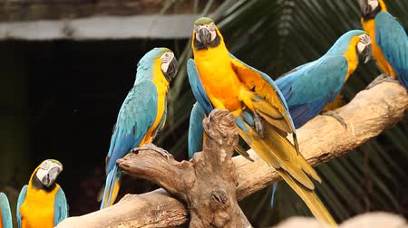 group of macaw in the branch