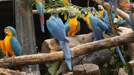 many macaw on the branch.mov
