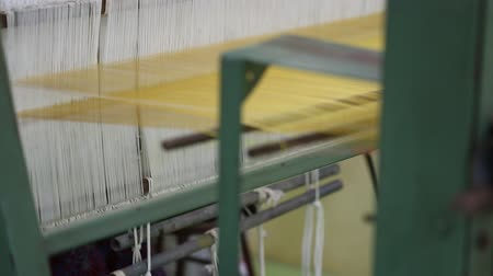 sepya : Weaving silk from hand weaving machine and Golden silk in Thailand. Plants in field