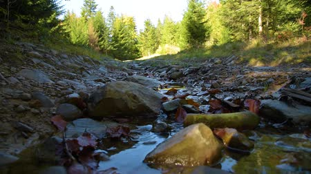 elf : Stream on forest road Stock Footage