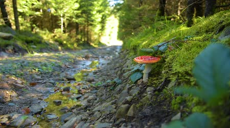magic mushrooms : Road in the forest
