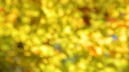 golden color : Autumn forest bokeh