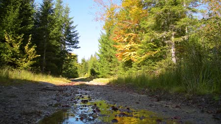 elfo : Stream on forest road Stock Footage