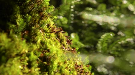 mossy : Epic Mountain Forest