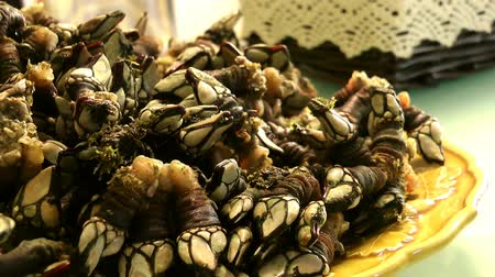backgroundpictures : Goose Barnacles on Dish Stock Footage