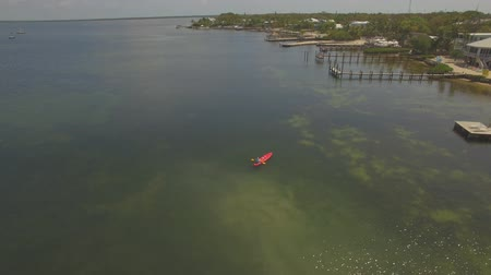 šnorchl : Aerial. A manatee family of 6 cows swim with kayakers. Rare shots.
