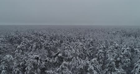 meseország : Aerial view. Frozen forest. Misty day. Trees are covered with snow. 50fps, 4K.