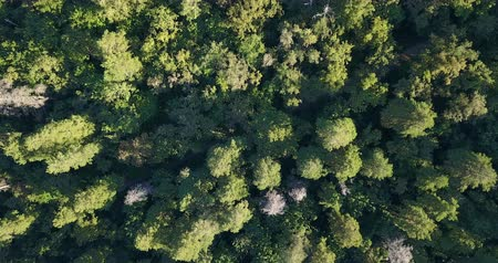 natureza : Aerial drone shot over the north european forest. Shot in 4K Vídeos