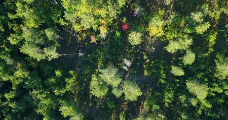 Aerial drone shot over the north european forest.